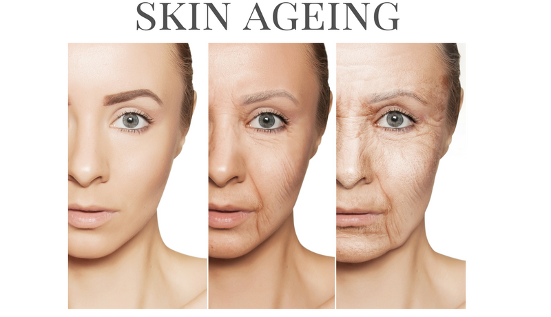 Fight against Skin Aging